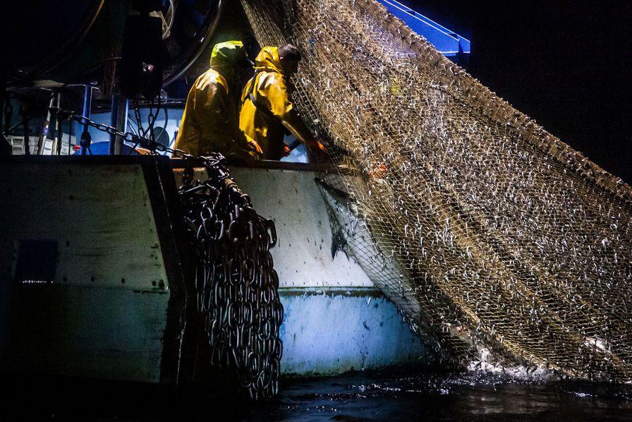 Un dauphin capturé dans des filets de pêche français selon des images transmises par Sea Shepherd… DR (Cliquez pour agrandir)