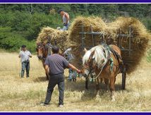 Faire son blé en Ardèche