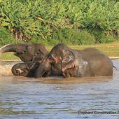 Laos - Elephant Conservation Center