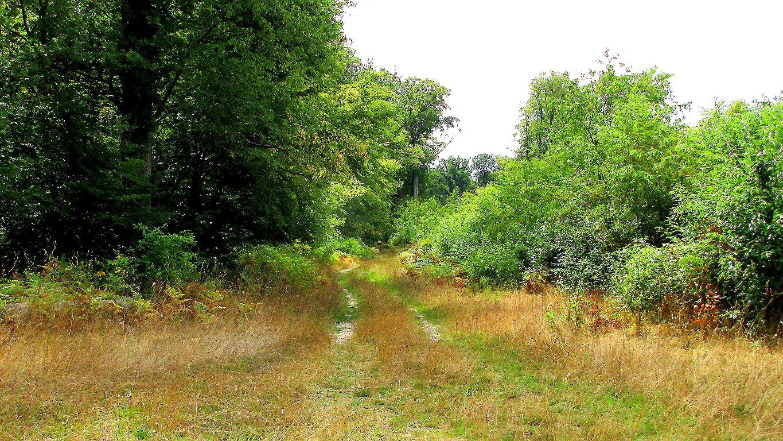 le carrefour du Chevreuil