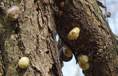 Les escargots argenteuillais se préparent aux JO