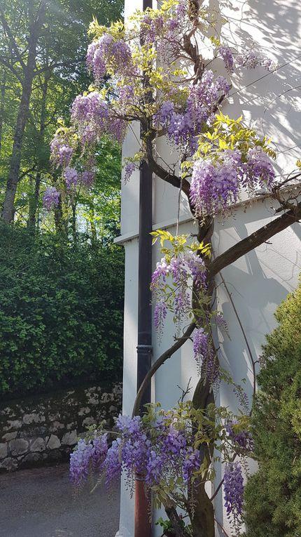 Dans le jardin de la Résurrection...