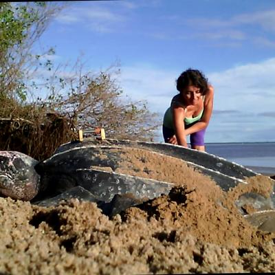 Awala yalimapo : site de ponte des tortues