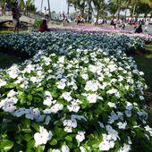 Festival Floral de Suan Luang - Fleurs du jour (20-01) - Noy et Gilbert en Thaïlande