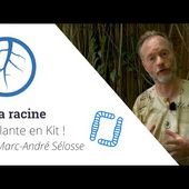La Plante en Kit ! Ep5 - La racine, avec Marc-André Sélosse