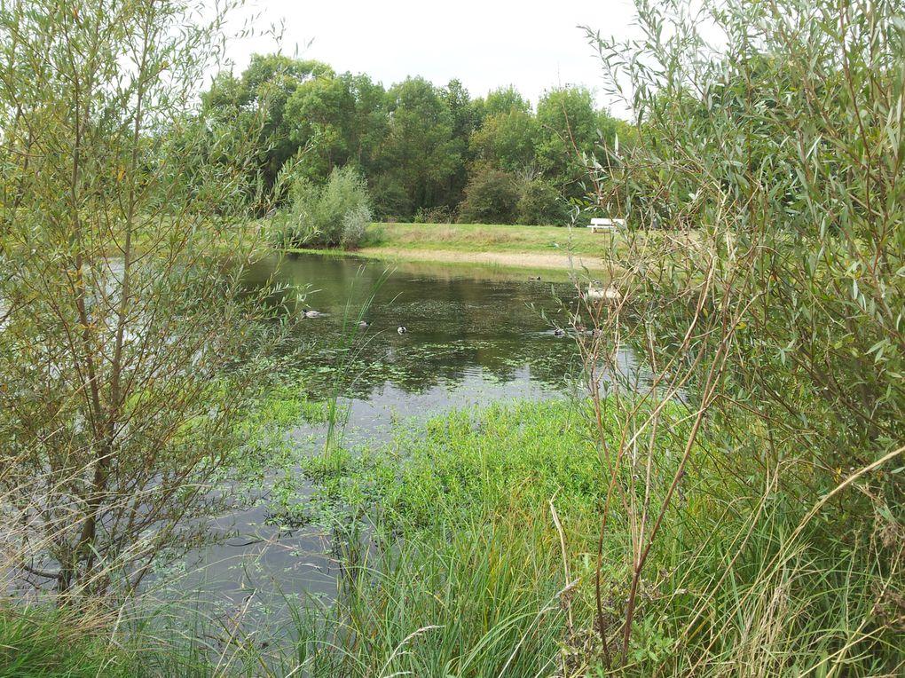 Sortie au Lac des Chanterelles le 12 Octobre 2013