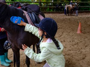 Stage Equitation Comines 11-13/07/2017