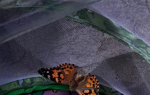 Découverte du cycle complet des papillons pour les M3
