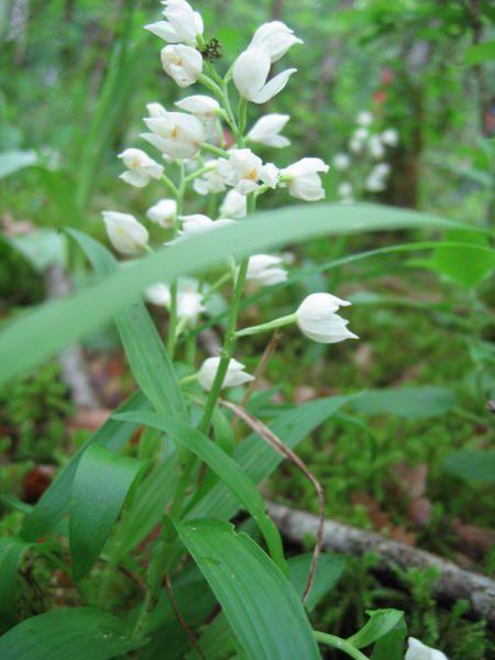 La vall&eacute;e de l'Echandon regorge de nombreuses esp&egrave;ces d'orchid&eacute;es sauvages.<br />Nous vous invitons &agrave; venir les d&eacute;couvrir durant nos sorties de mai.<br />Restez inform&eacute;s !