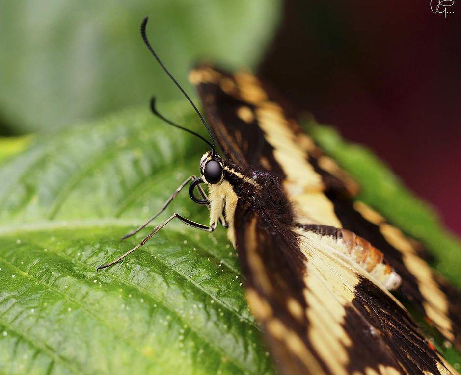 Les papillons du Jardin aux papillons de Vannes