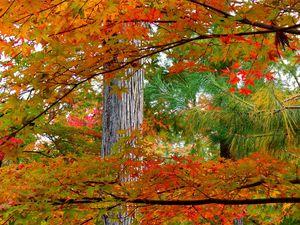Kyoto: Arashiyama: Féérie d'automne au jardin du Hôgon-in