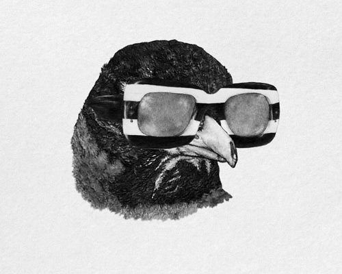 unknowneditors:  Susan Rotondo -On Tumblr CLUCK CLUCK MOTHER FUCKERS. Beautiful pencil drawings by Susan Rotondo. If you have anything you'd like us to see, please tag the post with#unknowneditorsand we'll take a look. Be sure to check outUnknownEditorsonTumblr&Facebook.