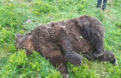 Ours abattu par balles dans les Pyrénées : revue de presse nationale
