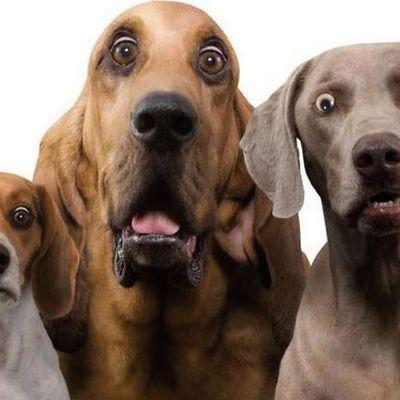 humour en images: les chiens délirants.....