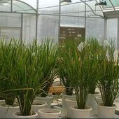Get in Touch with the Leading Commercial Greenhouse Manufacturers and Grow Quality Crops