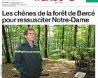 Les chênes de la forêt de Bercé font jazzer dans Ouest-France
