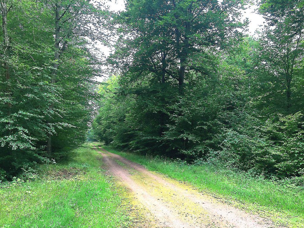 carrefour_Route de la Gouvernante_Route de Royallieu