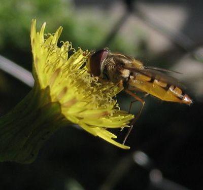 Quelques insectes...