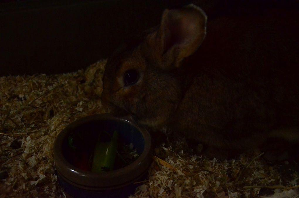lapins adoptés : Mélusine, Panama, Maximus, Buffy et quelques autres....