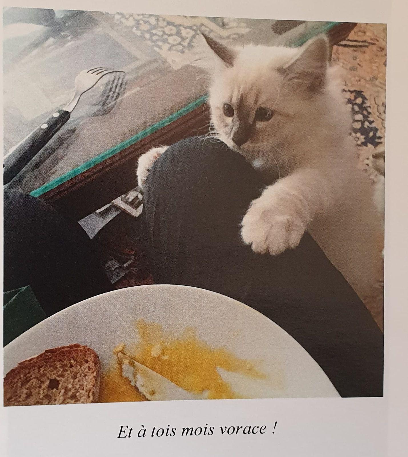 Tous les chats de ma vie, Editions des coussinets