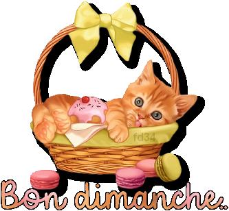 Bon dimanche - Chaton - Panier - Macarons - Render-Tube - Gratuit