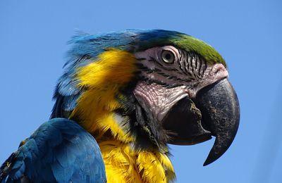 Parc Parrot World (Crécy-la-Chapelle 77)