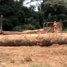 RdC: Le pillage des forêts