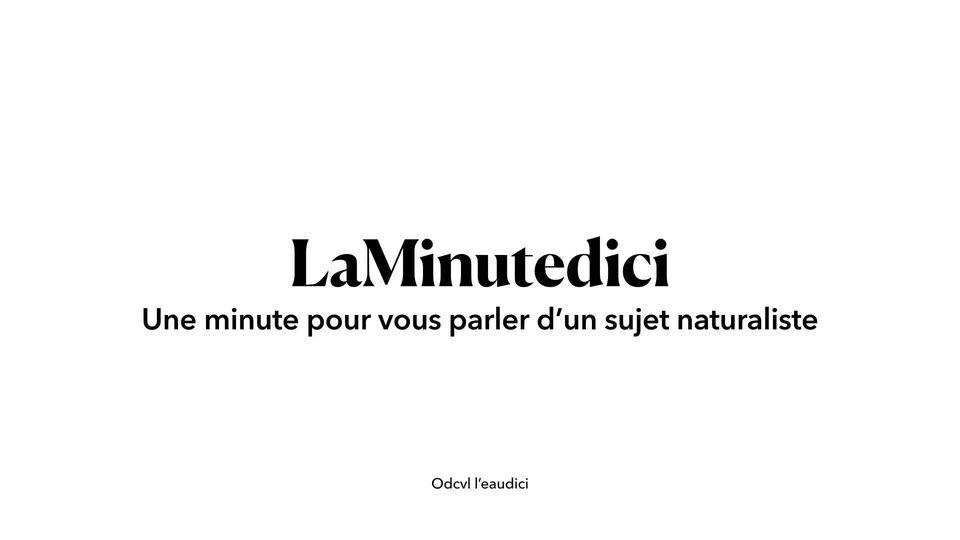 """LaMinutedici"""