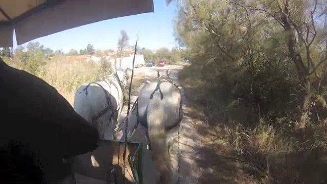 Visite en vidéo, les Marais de Vigueirat
