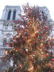 L'arbre de Noël de Notre-Dame de Paris