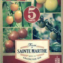 """Semis très anticipé de tomate cerise , """"crash test"""""""