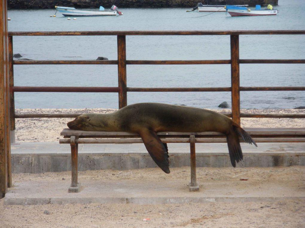 Album - Galapagos--EQUATEUR-