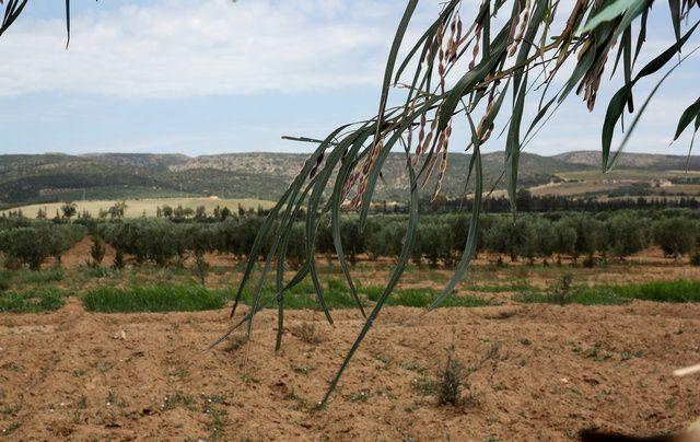 La ferme des Asphodèle  est située à Sidi Bakhti dans la commune de Boutlelis à Oran. C'est un exploitation agricole mais aussi une ferme d'accueil pédagogique.
