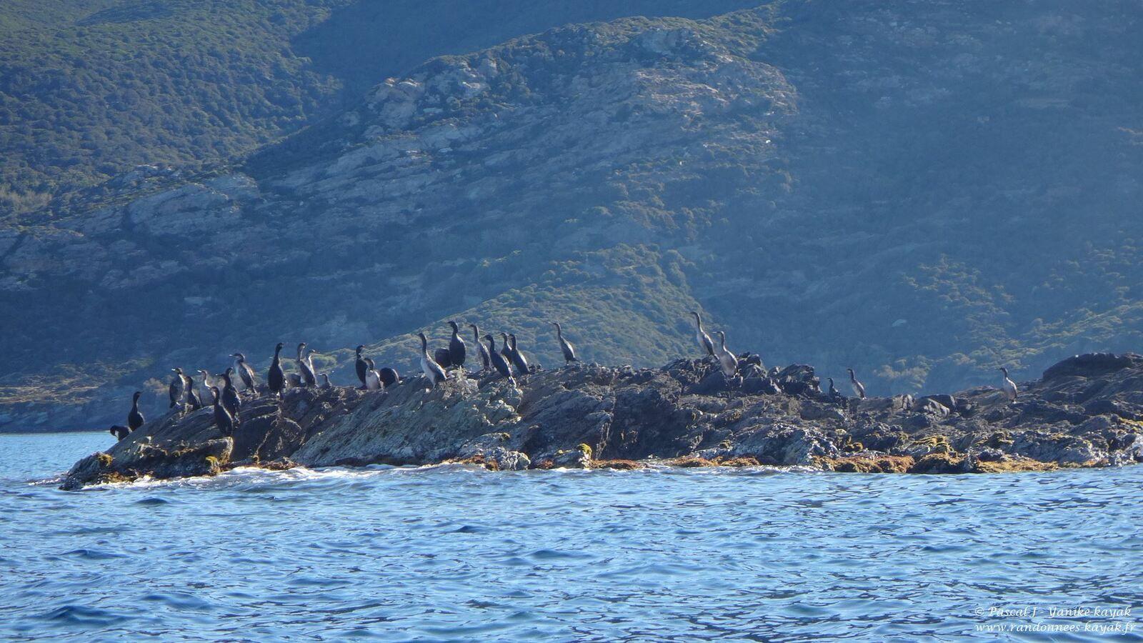 Corsica 2021, la beauté, essentielle, de la nature - Chapitre 5 : le Cap Corse, de Centuri à Santa Severa
