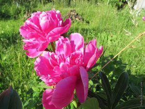 Les fleurs de printemps dans les jardins du Perrier