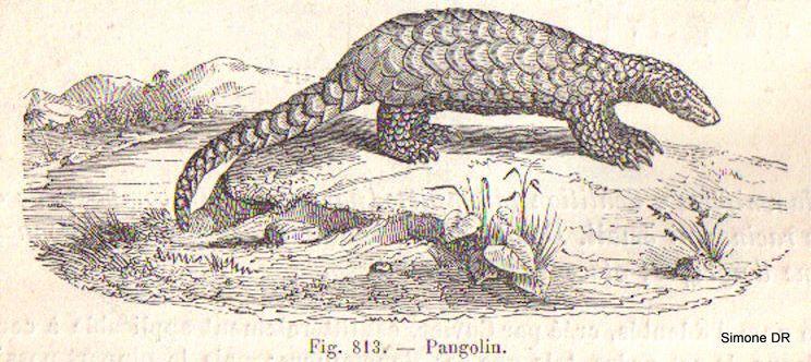 image d'un manuel de médecine du XIXème siècle