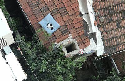 Un coussin sur le toit