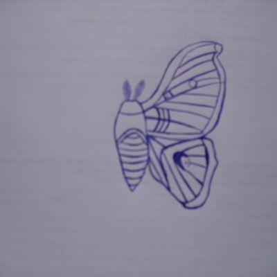 Comment dessiner un papillon de nuit ?