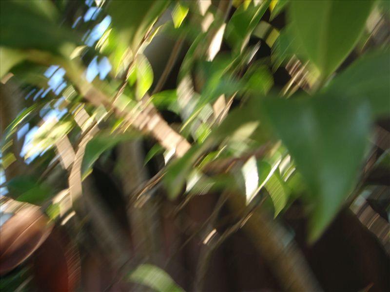 Les photos ont été prises par Noha en autonomie avec un petit appareil numérique. (95% des photos de doigts ont été supprimées...)