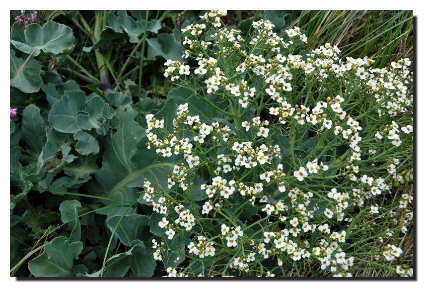 Gatteville-Phare, le granite et les fleurs
