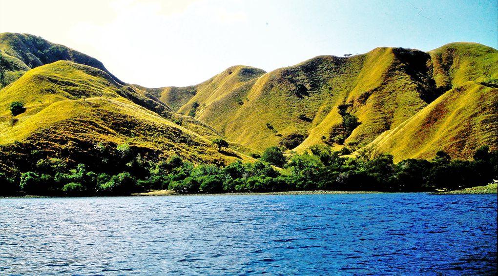C'est là que vivent les dragons de Komodo et Rinca - on en trouvera des plans rapprochés sur internet -. Partir de Bima, pour deux ou trois nuits sur un petit bateau local. Comme d'habitude, inutile de passer par un gros opérateur de tour....