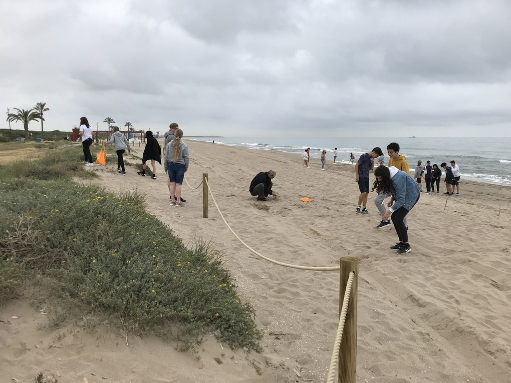 SMSP19 Environment Workshop on the beach