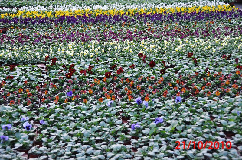 Des fruits, fleurs et plantes