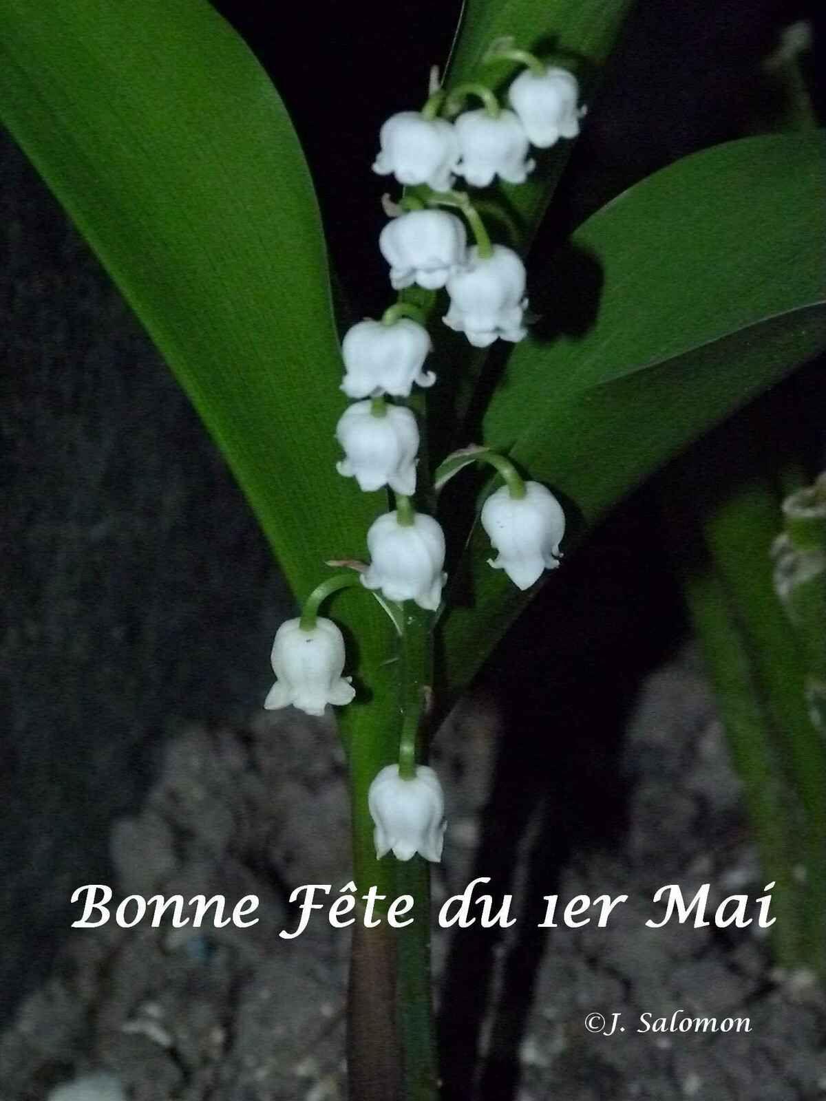 *   *   *   Bonne Fête du 1er Mai   *   *   *