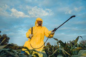 Santé : découvrez les 12 fruits et légumes les plus contaminés en pesticides ! - Biba Magazine