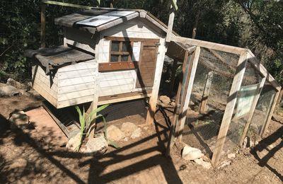 Finie la villégiature les poulettes ! Bon retour au jardin partagé du Devois