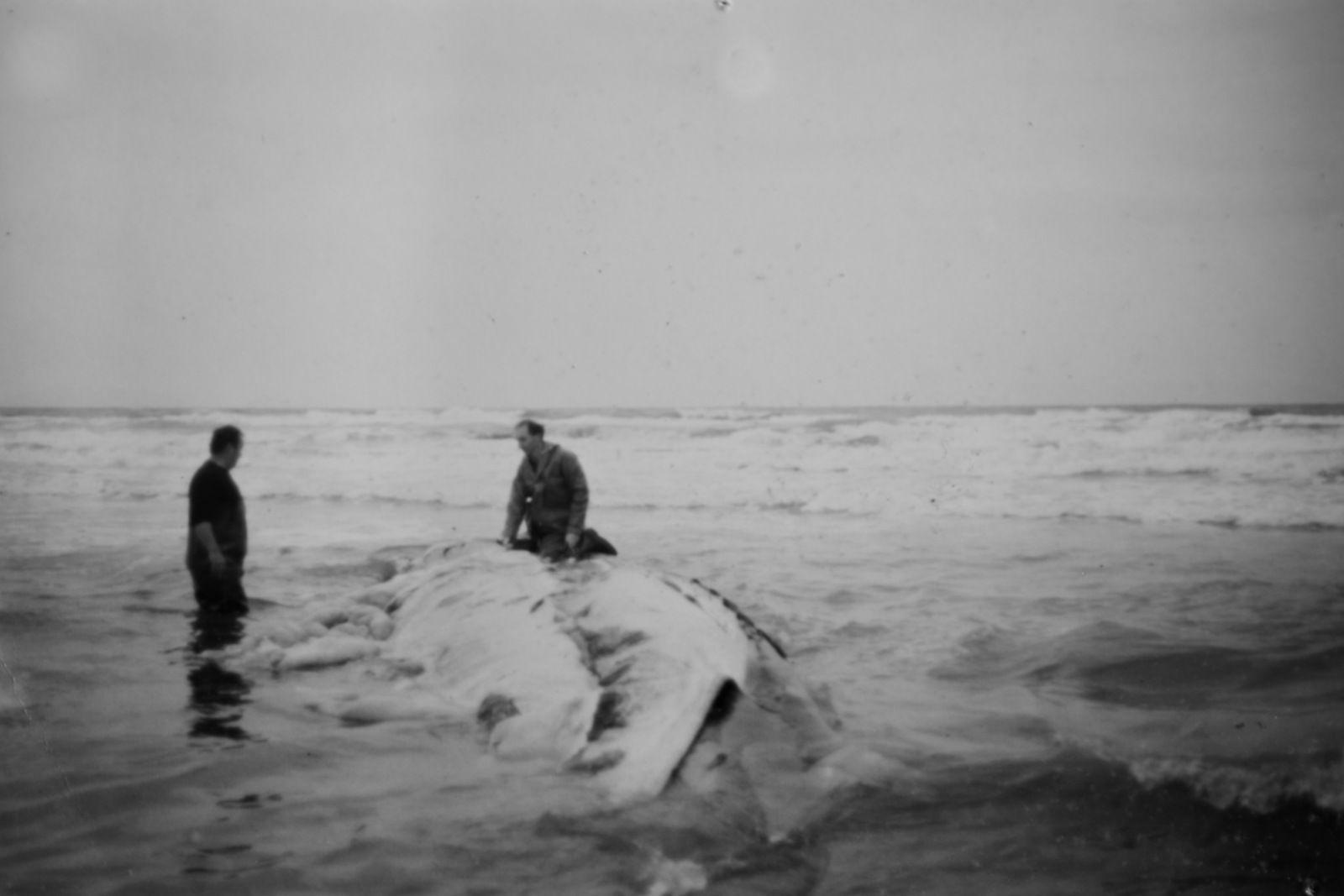 la baleine et le vigneron