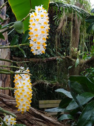 Serre aux orchidées d'Orchideeën Hoeve (suite)