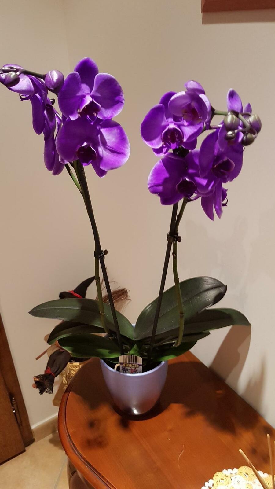 Les orchidées de Chritiane