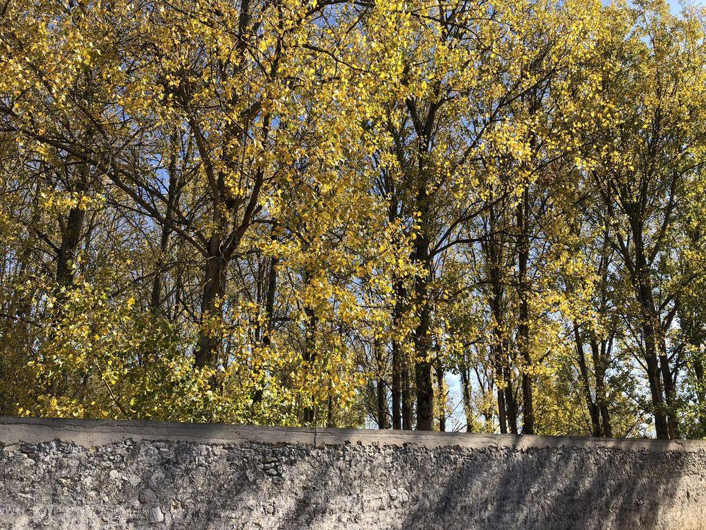 Randonnée de Maisse à Malesherbes - 17,7 km.